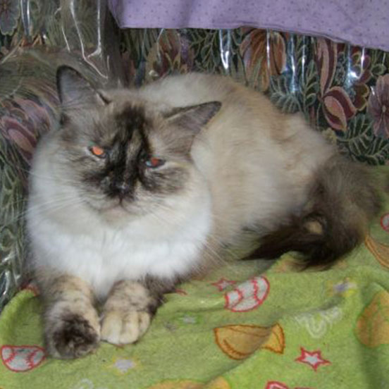 No-kill Animals Rescue and Adoption Society in Surrey – Save Animals